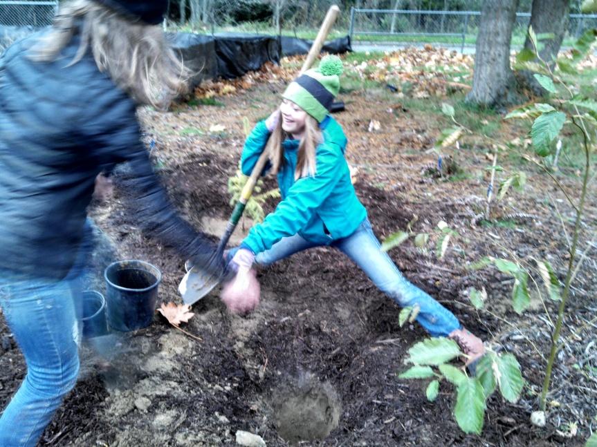 Tree-planting yoga