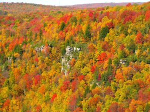 blackwater-canyon-fall-colors_-_west_virginia_-_forestwander
